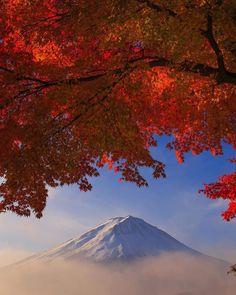 "lifeisverybeautiful: ""Autumn Leaves, Mt.Fuji, Japan """