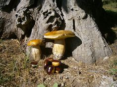Tanto Piacere ;-) Stuffed Mushrooms, Autumn, Vegetables, Image, Food, Stuff Mushrooms, Fall Season, Essen, Fall