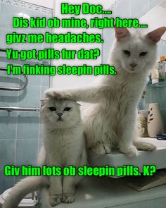 Knock him owt, Doc, until hims is growed up! Knock him owt, Doc, until hims is growed up! Hate Cats, Silly Cats, Cute Cats And Kittens, I Love Cats, Funny Kitties, Ragdoll Kittens, Adorable Kittens, Funny Animal Memes, Cute Funny Animals