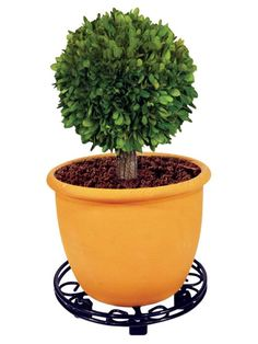 Heavy Duty Plant Pot Mover Made of Plastic Coated Solid Steel Features 5 Caster Wheels 45 x 45 x 11 cm Potted Plants, Planter Pots, Wheels, Plastic, Pot Plants, Container Plants, Container Garden, Houseplants
