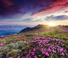 The cloud-strewn sky and flower-covered mountainside seem to mirror each other.