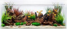 Aquarium Design Group - An Aquascape for Gold Gourami