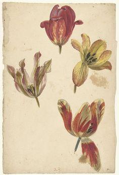 Bloemstudies van vier tulpen, Elias van Nijmegen, 1677 - 1755
