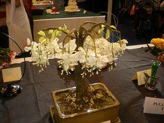 פרחים בתערוכה by yud, via Flickr