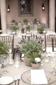 Lavender is a trending color! Consider our lavender wedding decor ideas to give your wedding style a delicate, tender look. Lavender Potted Plant, Potted Plants, Potted Plant Centerpieces, Lavender Centerpieces, Flower Pot Centerpiece, Centrepieces, Rustic Wedding, Our Wedding, Trendy Wedding