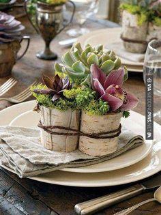 Plantes grasses, orchidées et mousse verte dans petits pots en écorce entouré d'une corde