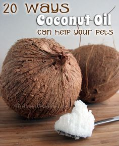 20 Ways Coconut Oil Can Help Your Pets | deliciousobsessions.com