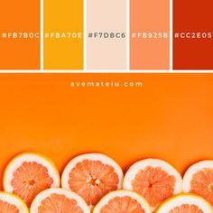 Grapefruit background with copyspace Color Palette Orange Color Palettes, Color Schemes Colour Palettes, Red Colour Palette, Color Combos, Orange Palette, Orange Color Schemes, Red Color, Yellow Pantone, Pantone Color