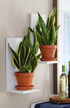 Sansevieria to eye level with easy-to-make two-board wall planters. Bring Sansevieria to eye level with easy-to-make two-board wall planters. - -Bring Sansevieria to eye level with easy-to-make two-board wall planters. Lowes Creative, Creative Ideas, 31 Ideas, Decoration Plante, Low Light Plants, Deco Floral, Snake Plant, Low Lights, Houseplants
