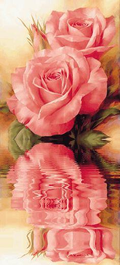 Анимация. Красивые розы…