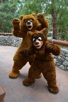Koda and Kenai still meeting in Redwood Creek Challenge Trail | Flickr - Photo Sharing! by Loren Javier