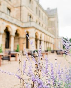 Currently on my editing screen is Emily and Matt's wedding at this gorgeous place. such beautiful grounds and we got to enjoy them in the sunshine . Walton Hall, Garden Wedding, Wedding Styles, Wedding Venues, Lavender, Sunshine, Engagement, Table Decorations, Places