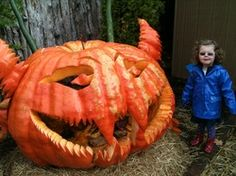 Hallowe'en: the changing face of pumpkins Moving To Chicago, Learn A New Language, Travel Information, Pumpkin Carving, Explore, Halloween, Pumpkins, Face, Usa