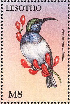 White-bellied Sunbird stamps - mainly images - gallery format