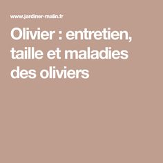 Olivier : entretien, taille et maladies des oliviers