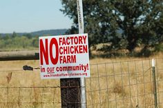 "This links to the Aysha Akhtar M.D., M.P.H. article: ""We Are Not Safe From Bird Flu as Long as Factory Farms Exist ."""