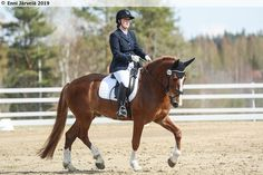 Sivukuva, Finnhorse gelding (b. 2014 Finland, by R. Kajaus out of Sivutar) English Horses, Pretty Horses, Finland, Racing, Animals, Inspiration, Running, Biblical Inspiration, Cute Horses