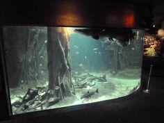 Amazon Gallery - Mixed-Species Tank