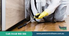 Looking for emergency pest control & inspection ? Call our Insured pest control expert on 0448955555 for same day pest control services. Best Pest Control, Pest Control Services, Bug Activities, Types Of Bugs, Wasp Nest, Stink Bugs, Australian Homes, Ants, Integrity