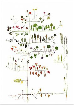 Classification of plants.    [Multivaxt by LOTTA OLSSON: all her prints at http://www.lottastrad.se/index.php?/bestaellning/]