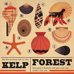 TwoDots postcard 38 #twodots #postcard #retro #illustration #naturalhistory #nature #kelp #shells #starfish #hermit #hermitcrab #art #artwork #dots #game #app