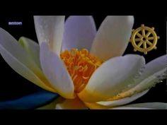 Green Tara Mantra by Ani Choying Drolma - Buddhist Chants Green Tara mantra:  Om Tare Tuttare Ture Svaha