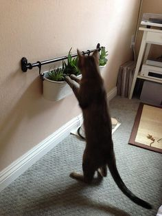 diy cat play spaces