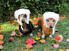 Sweet hats brah...