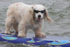 Radical dog!