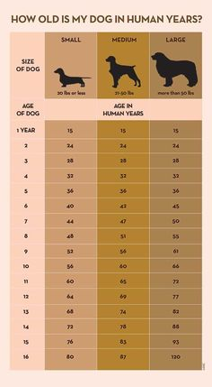 Your Dog's Age In Human Years: A Conversion Chart Your Dog's Age In Human Years: A Conversion Chart Dog years calculator infographic