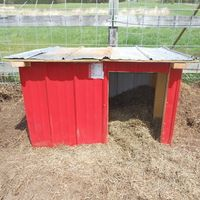 Diy pot belly pig house