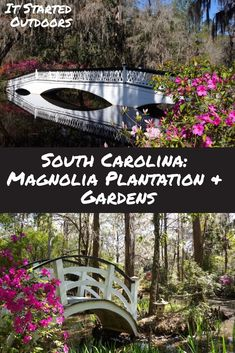 Plantation and Gardens With a garden straight out of a romantic novel, Magnolia is at the top of the list if you want to experience the wealth and beauty of southern living. South Carolina Attractions, South Carolina Vacation, Myrtle Beach Vacation, Myrtle Beach South Carolina, Charleston South Carolina, Isle Of Palms South Carolina, Columbia South Carolina, Charleston Style, Gardens