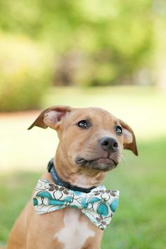 #Pitbull #Puppy #dogs