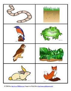 FREE Food Chain Card Game.....5 Pages Basic Principles, Biology, Earth Sciences Grade Levels Kindergarten, 1st, 2nd, 3rd, 4th, 5th, 6th, 7th, 8th, Homeschool Resource Types Activities This free download includes 21 cards of varying images and the remaining cards have food chain vocabulary. These cards can be used at any age. I use them with kindergarten but vocabulary cards make the activity applicable to the higher grades.