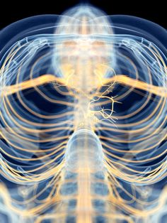 Longer Exhalations Are An Easy Way To Hack Your Vagus Nerve. Respiratory vagus nerve stimulation (rVNS) counteracts fight-or-flight stress. Relaxation Response, Stress Relaxation, Diaphragmatic Breathing, Autonomic Nervous System, Vagus Nerve, Arthritis Symptoms, Fight Or Flight, Pranayama, Reduce Inflammation