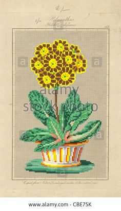 Download this stock image: Berlin wool work pattern for Polyanthus Fletcher's defiance - CBE75K from Alamy's library of millions of high resolution stock photos, illustrations and vectors.