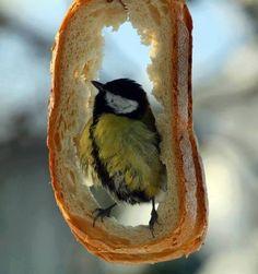 Full tummy bird