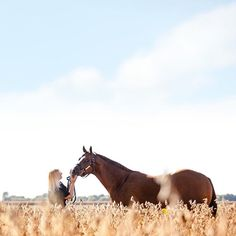 My favorite color is HARVEST #horsephotography #equinephotography #horse #equine #horsesofinstagram #horselover #instahorses #myhorse #equestrian #bestofequines #ilovemyhorse #horsecrazy #quarterhorse #aqha #aqhapride #aqhaproud #horsestagram #harvest Horse Hay, My Horse, Horse Love, Horse Girl, Pretty Horses, Beautiful Horses, Animals Images, Animals And Pets, Horse Facts