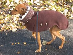 Free patterns and step-by-step instructions for 4 different Iggy outfits… I Love Dogs, Cute Dogs, Italian Greyhound Clothes, Dog Winter Coat, Dog Clothes Patterns, Grey Hound Dog, Pet Clothes, Dog Clothing, Dog Coats