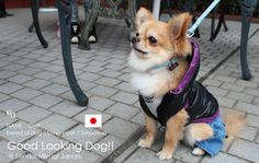 DOG FASHIONISTA STREET