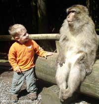 Monkey habitat, free roam for visitors, interact with the monkeys  English - Affenberg Salem