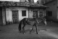 #This #is #the #end #my #friend #the #horse(#small #town #india)   #titwala #thane #india #monochrome #streetphotography