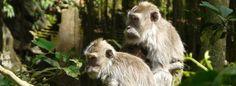 #Indonesia #Bali #Ubud #Monkeyforest Photo by Imam Subandrio