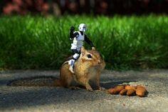 Stormtropper riding a chipmunk