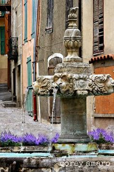 Valensole ~ Provence
