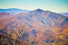 Things to do in Asheville NC (other than eat!) This list compiles all the favorite activities of an Asheville local to help make your trip amazing! Ashville North Carolina, Ashville Nc, North Carolina Homes, Get Outdoors, The Great Outdoors, Places To Travel, Places To See, Nc Mountains, Hiking Spots