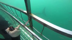 Shark Cage Diving, Cape Town more on www.wandervibe.com #travel #southafrica #capetown #travelblog #shark #cage #diving