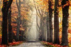 nature   Autumn morning   by edwin_m   http://ift.tt/1GLuZIK