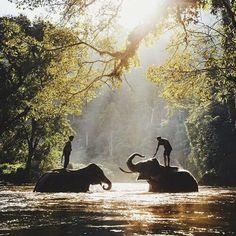 elephant . elephants . river . trees . jungle . tropics . tropical . travel . abroad . wander . wanderlust. explore . Thailand