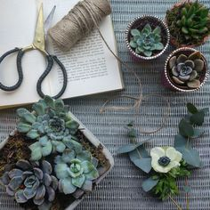 Succulents styled by Frankie @ Boss Creatives Fruit And Veg, Fresh Fruit, Interior Stylist, Allotment, State Art, Fashion Stylist, Succulents, Boss, Floral